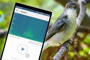 Deze gratis app herkent 3000 verschillende vogelgeluiden