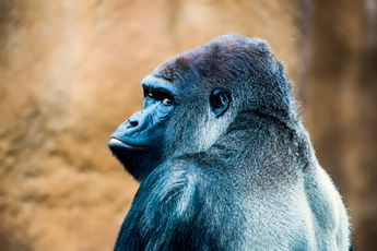 Nieuwe generatie Gorilla Glass beschermt smartphonecamera's