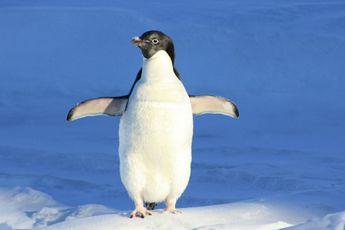 Ga op zoek naar pinguïns met Koning Pinguïn van Greenpeace