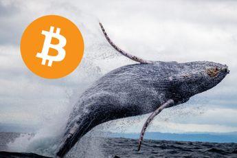 Bitcoin whales sterven uit: wat betekent dit voor de koers?