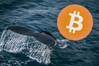 Whales voeren druk op de bitcoin prijs op en kopen 31.848 BTC op één dag