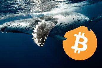 Aantal grote bitcoin whales daalt tijdens stijging naar $60.000