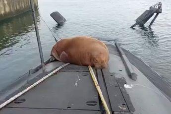 Verzin je niet: Walrus slaapt in Den Helder op duikboot van de Walrusklasse