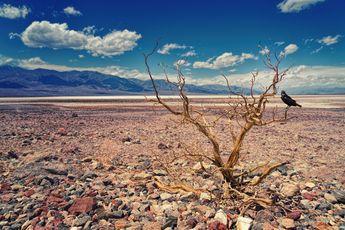 Mogelijk recordtemperatuur gemeten in VS: opnieuw wordt Noord-Amerika getroffen door extreme hittegolf