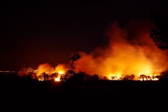 Extreme droogte en massale bosbranden hebben gezorgd voor de vernietiging van 2,5 miljard bomen in Amazone