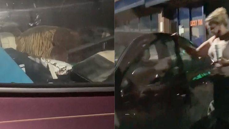 Krioelt van de kakkerlakken in Uber Eats auto in Atlanta
