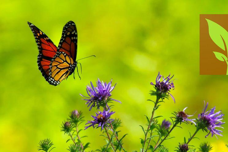 De Veldgids-app is gemaakt met Flutter en nu in de aanbieding