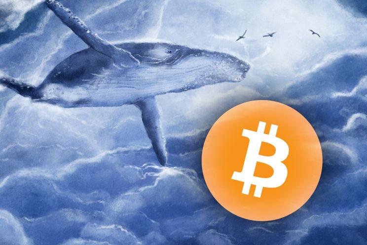 Whales kochten 85.700 Bitcoin in een paar weken